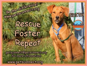 rescue_foster_adopt_edith_july_25_2017 (3)ps