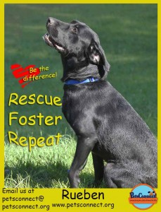 rescue_foster_adopt_rueben_july_29_2017 (3)ps
