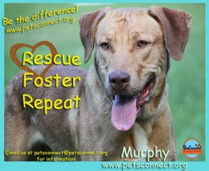 rescue_foster_murphy_july_29_2017 (5)ps