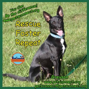 rescue_foster_repeat_greyson_july_25_2017 (4)ps