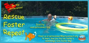rescue_foster_scotty_pool_time_july_30_2017 (3)ps