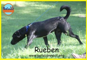 rueben_july_29_2017 (2)ps