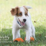 scotty_august_13_2017 (18)ps