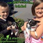trixie_alex_coming_home_july_9_2017 (1)ps