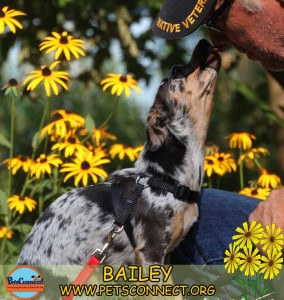 bailey_sept_10_2017 (1)ps