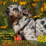 bailey_sept_10_2017 (2)ps