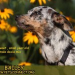 bailey_sept_10_2017 (3)ps