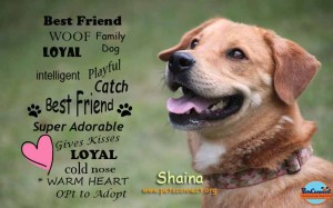best_friend_words_shaina_head_shot_august_27_2017 (2)ps