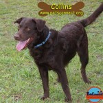 collins_august_27_2017 (4)ps