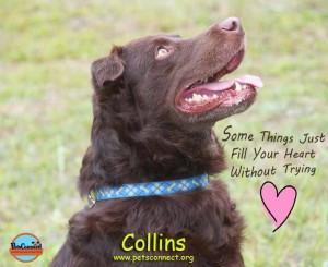 collins_august_27_2017 (5)ps