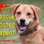 rescue_shaina_head_shot_august_27_2017 (3)ps