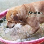 shaina_pool_august_22_2017ps