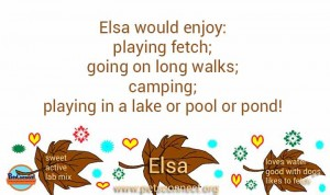 tag for video two_two_elsa_sept_7_2017 (12)ps