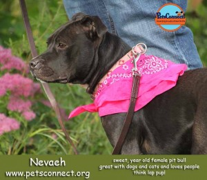 nevaeh_setpember_11_2017 (2)ps
