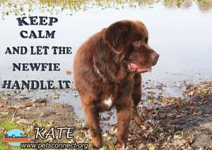 STAY CALM_Kate_nov_3_2017 (6)ps