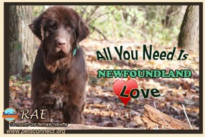all_you_need_rae_nov_10_2017 (4)ps