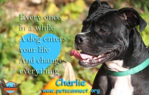 charlie_october_20_2017 (1)ps