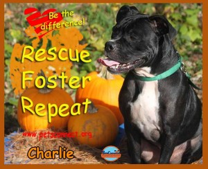 charlie_october_20_2017 (4)ps