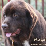hazel_nov_7_2017 (3)ps