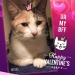 PC_Valentines_LRG12