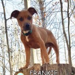 frankie_nov_24_2017 (6)ps