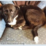 roxie_chair_dec_27_2017ps