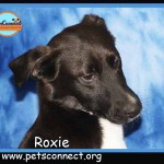 roxie_dec_27_2017 (1)ps