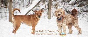 bella_sweet_pea_feb_7_2018 071ps