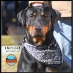 hercules_march_3_2018 (2)ps
