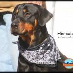 hercules_march_3_2018 (6)ps