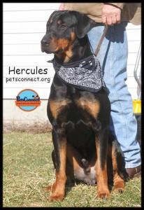 hercules_march_3_2018 (9)ps
