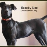 scooby_february_11_2018 (4)ps