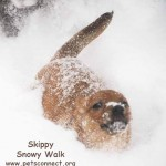 skippy_snow_feb_9_2018ps