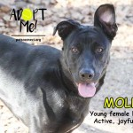 molly_march_19_2018 (10)ps