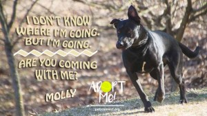 molly_march_19_2018 (1)ps