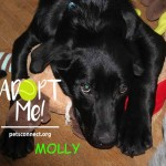 molly_march_19_2018 (4)ps