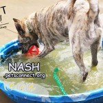 nash_august_26_2018 (13)ps