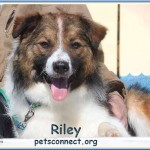 riley_march_22_2018 (16)ps