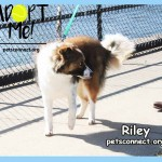 riley_march_22_2018 (7)ps