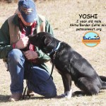 yoshi_march_19_2018 (7)ps