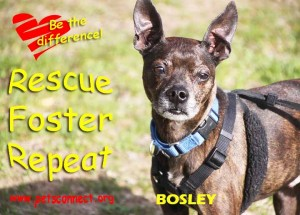 bosley_april_26_2018 (5)ps