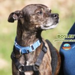bosley_april_26_2018 (6)ps