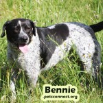 bennie_june_24_2018 (1)ps