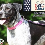 fourth of july_bennie_june_24_2018 (5)ps