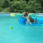 poppy_in_pool_july_3_2018 (3)