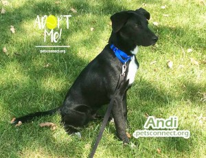 andi_july_26_2018 (1)ps