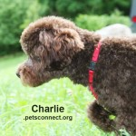 charlie_june_14_2018 (2)ps