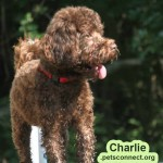 charlie_june_17_2018 073ps