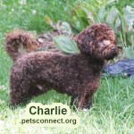 charlie_june_17_2018 (2)ps