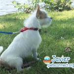 javier_july_26_2018 (1)ps